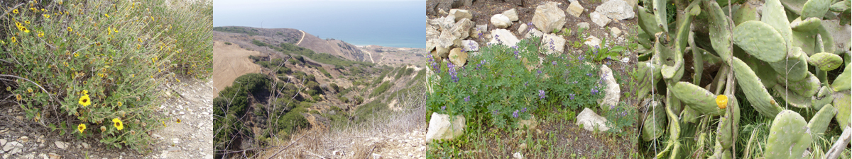 [ banner image:  4 photos of Palos Verdes vegetation ]